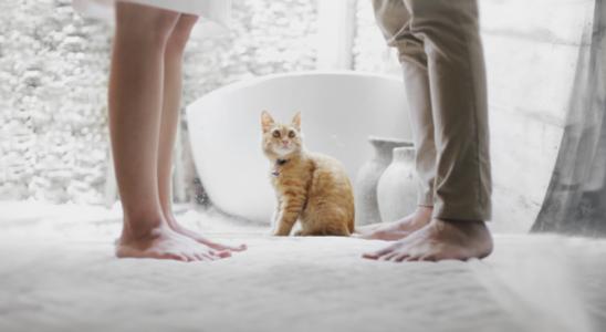 cat 3 548x300 - Ипотека при разводе - особенности раздела ипотечной недвижимости и долга